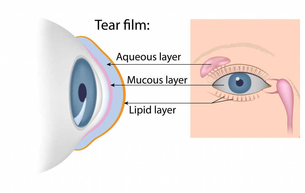 Diagram of the tear film