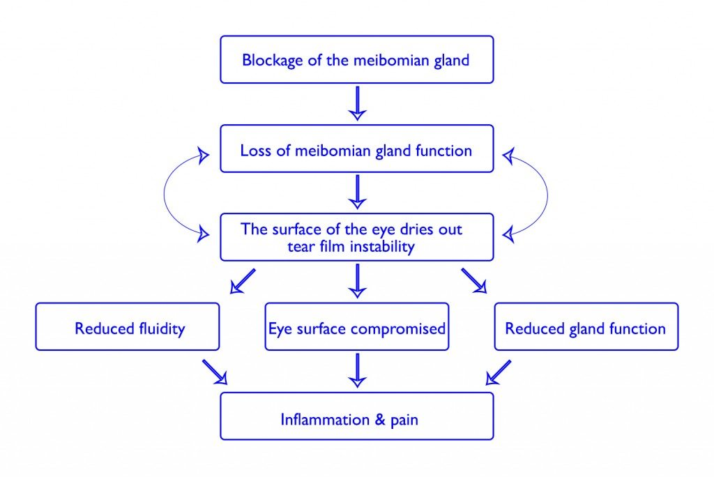 meibomian gland blockage leads to inflammation and pain.