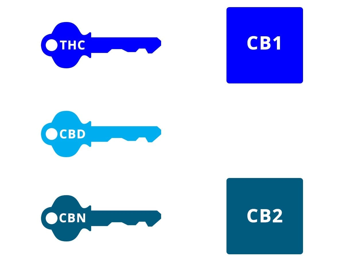 Cannabinoids and the endocannabinoid receptors